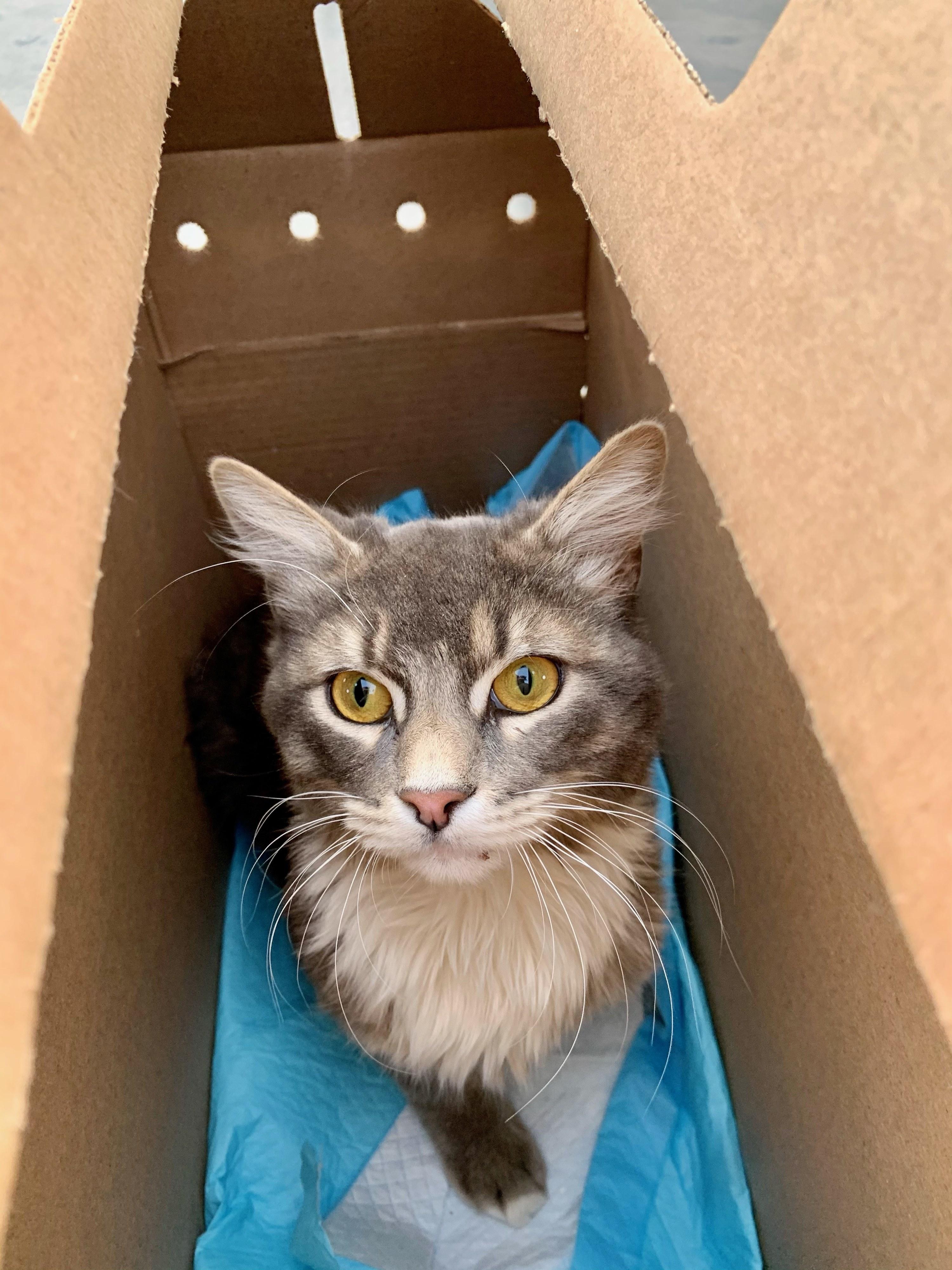 A cat sits in a box