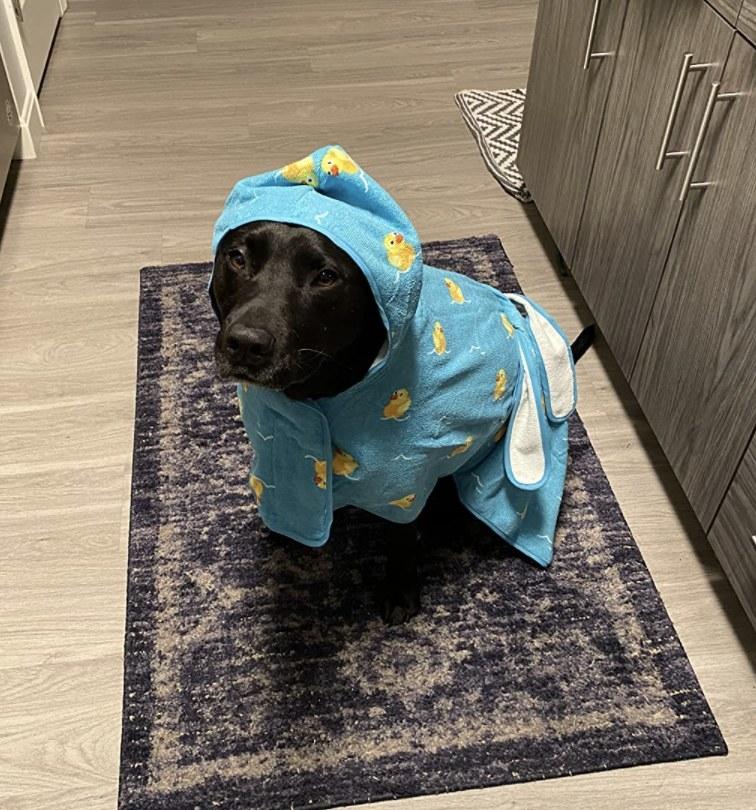 A dog in a duck bathrobe