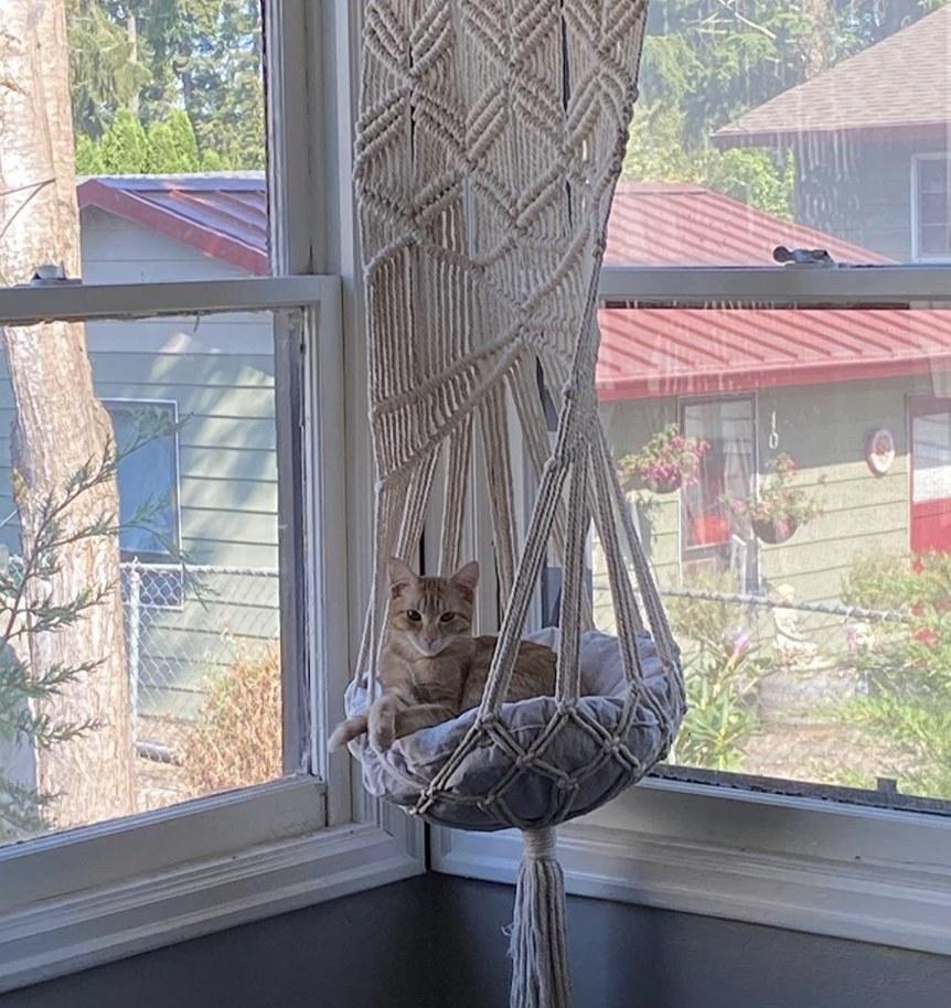 A reviewer's cat on a macrame cat hammock