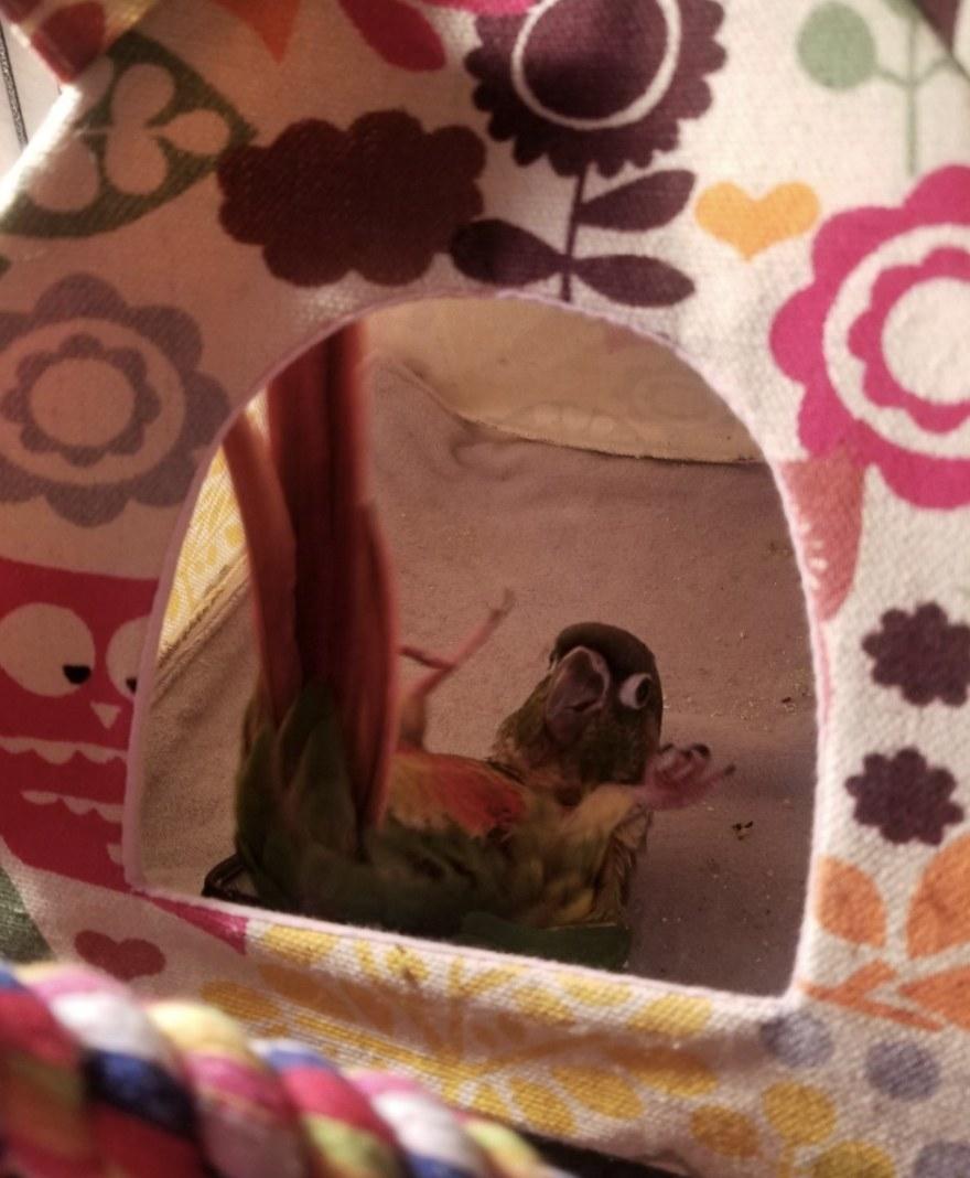 A bird inside a hut