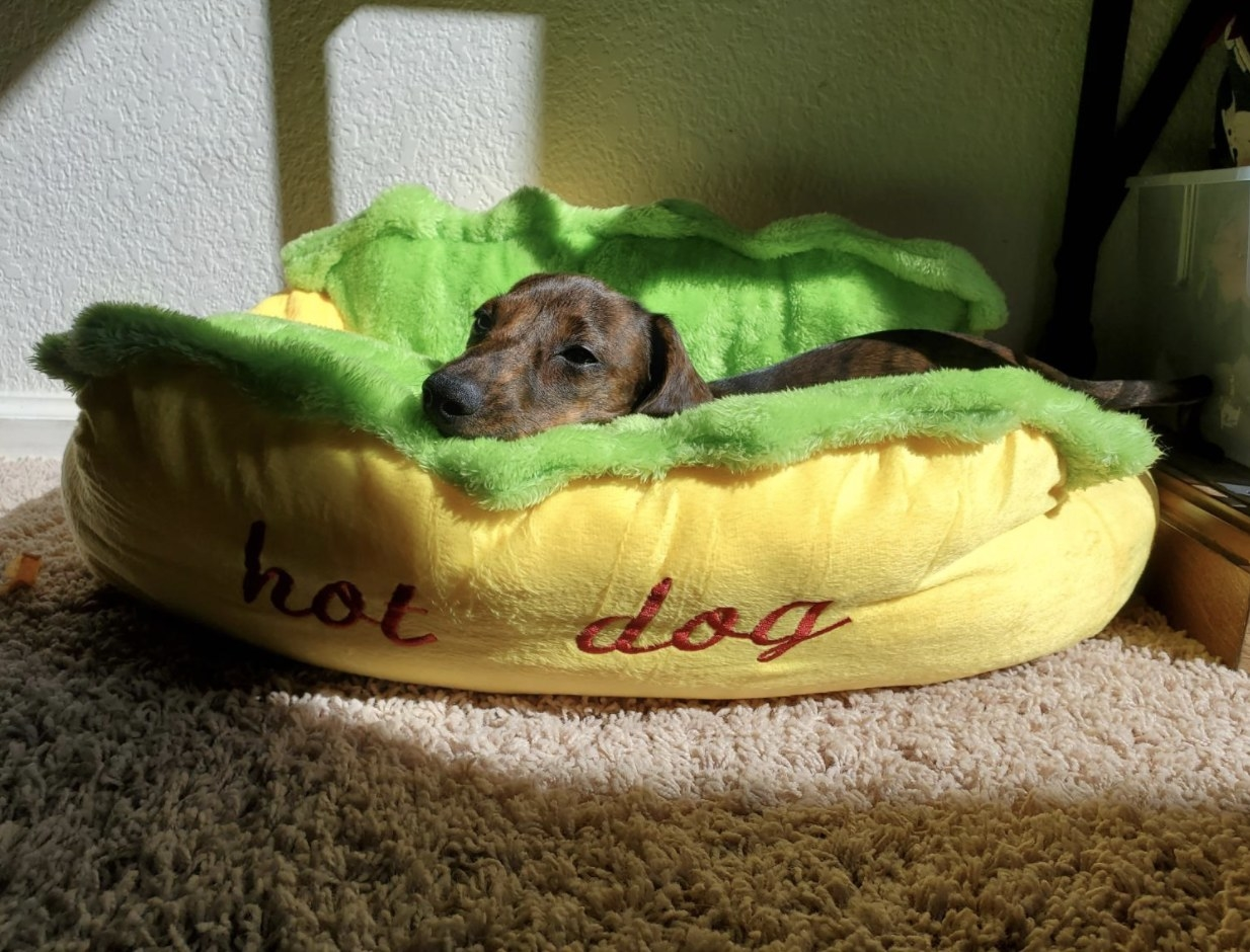 A dog on a hot-dog-shaped bed