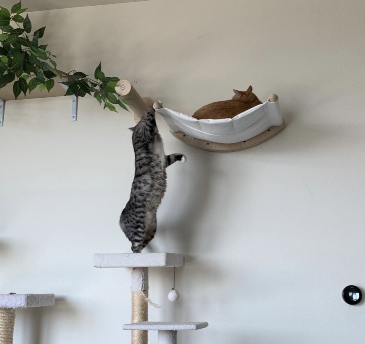 A cat playing with another cat on a mounted hammock