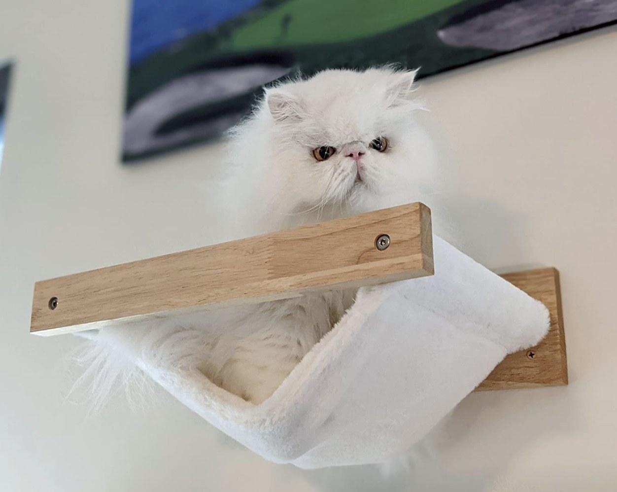A cat on a hammock