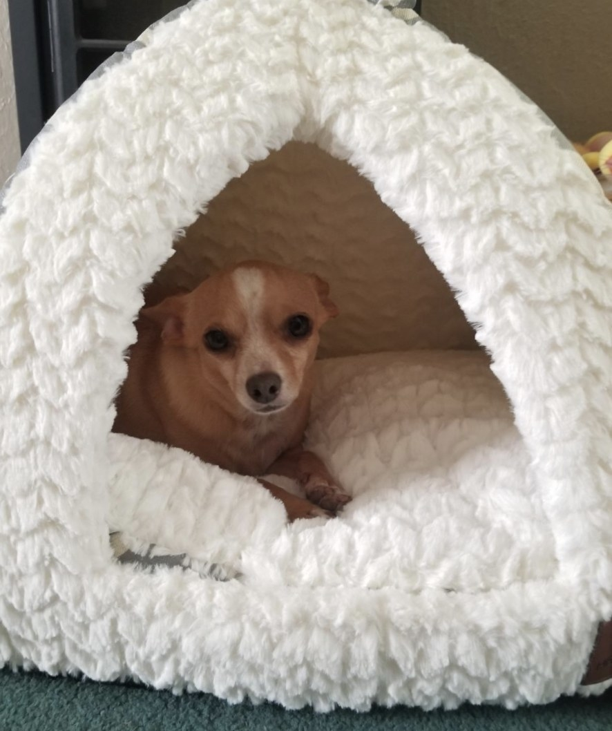 A dog in a white tent