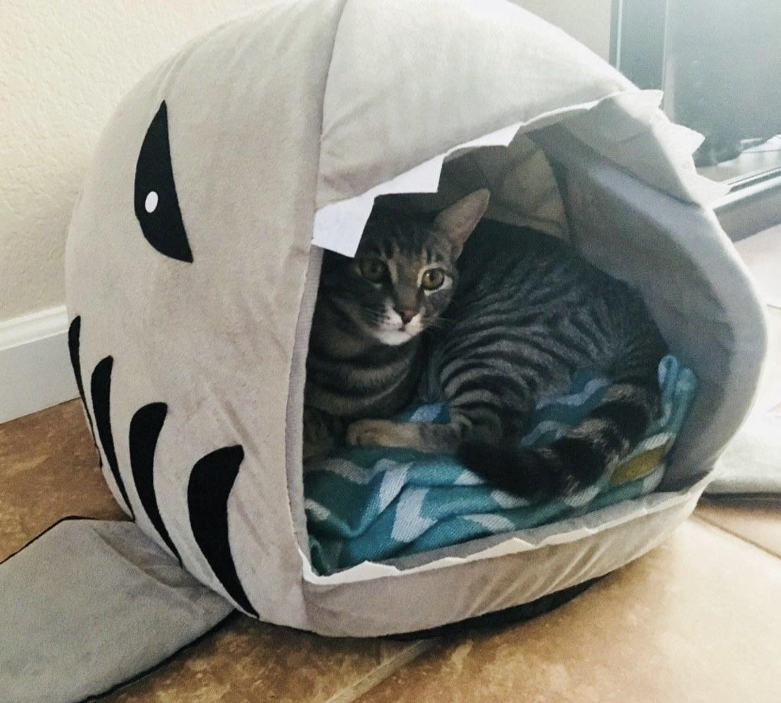 A cat in a shark-shaped hut