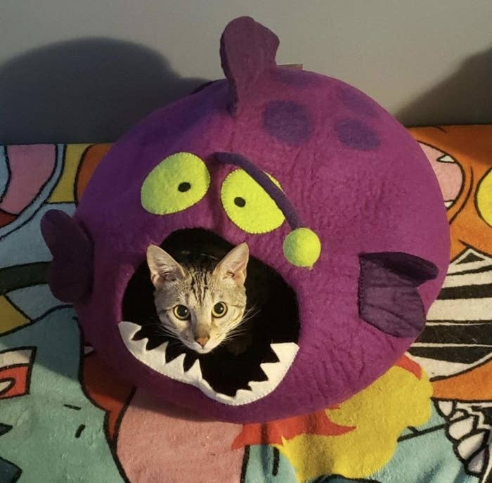 A cat in an anglerfish-shaped hut