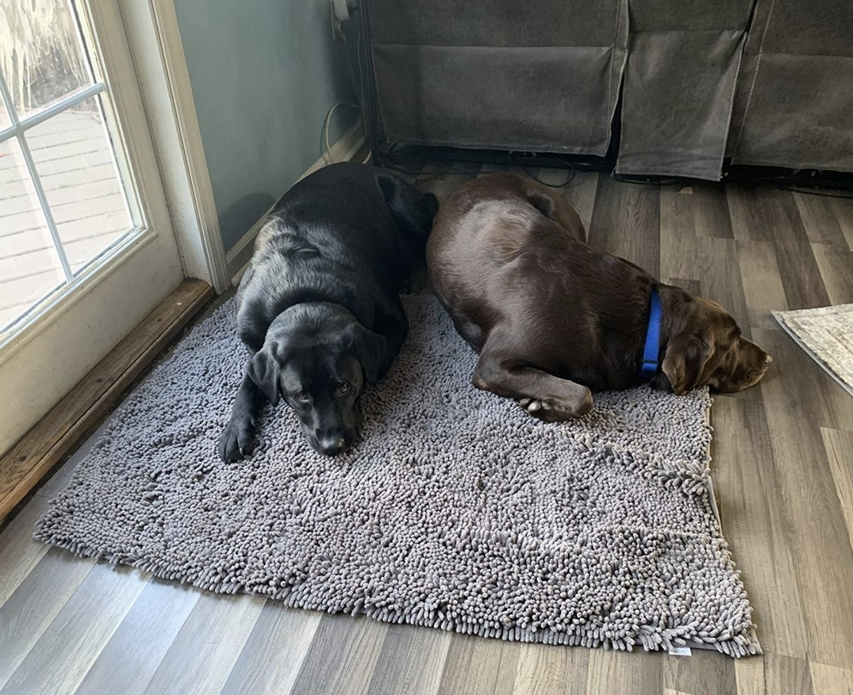 Two dogs on a towel rug
