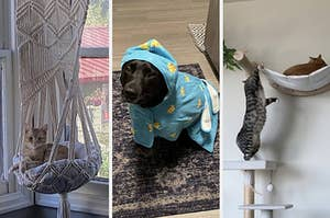 A split thumbnail of a cats in hammocks and a dog in a bathrobe