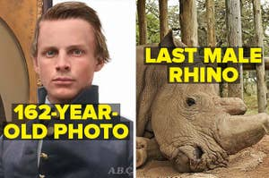 162 year old portrait of a civil war soldier restored and colorized, and the last male northern white rhino