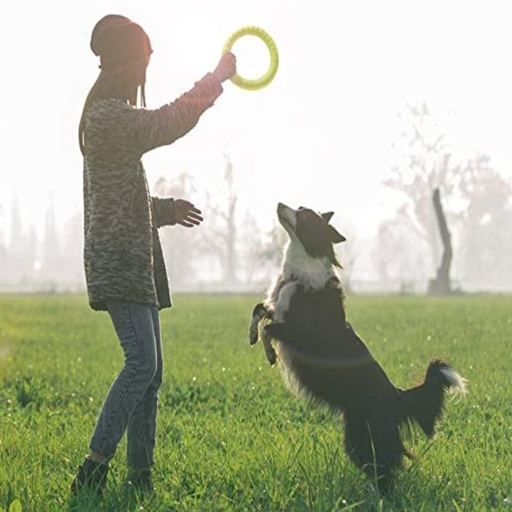 dog and owner in field playing with ring