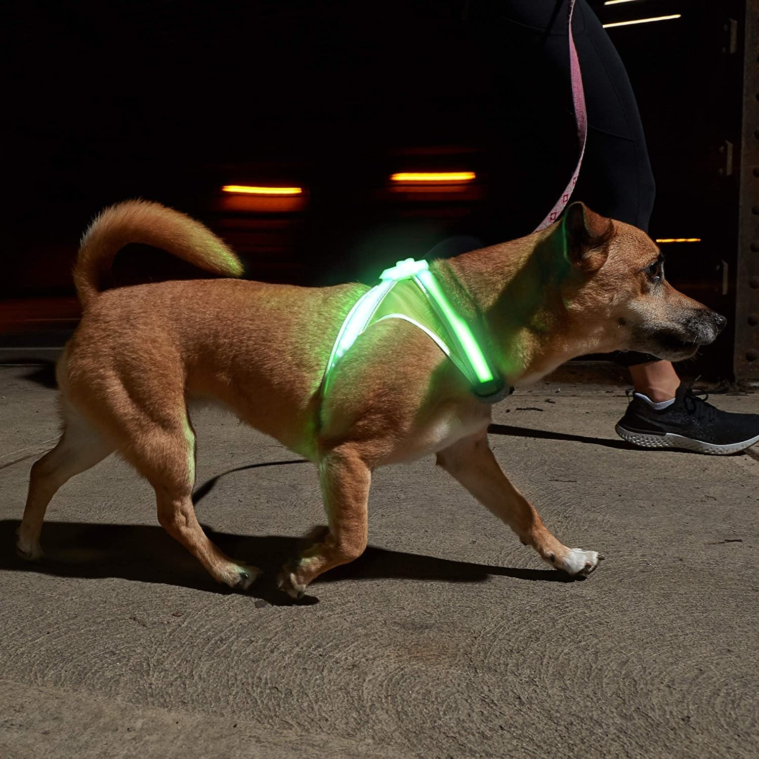 Dog wearing the green light up harness