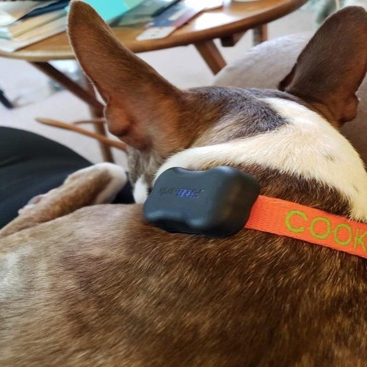 dog's neck with collar around it