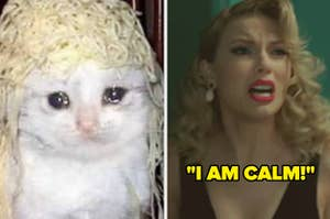 crying cat and Taylor saying