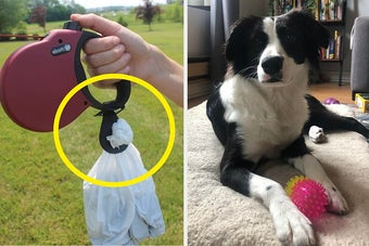 A poop bag holder and a dog