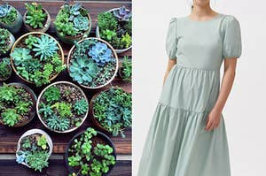 On the left, some succulents in pots on a table, and on the right, someone wearing a long dress with short sleeves