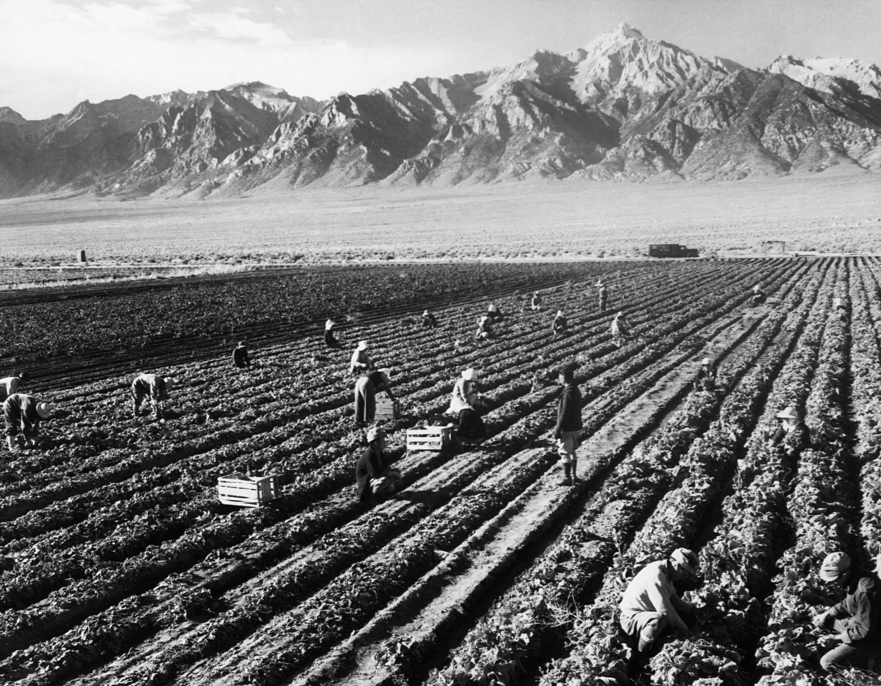 Japanese Americans farm with a mountain vista in the background