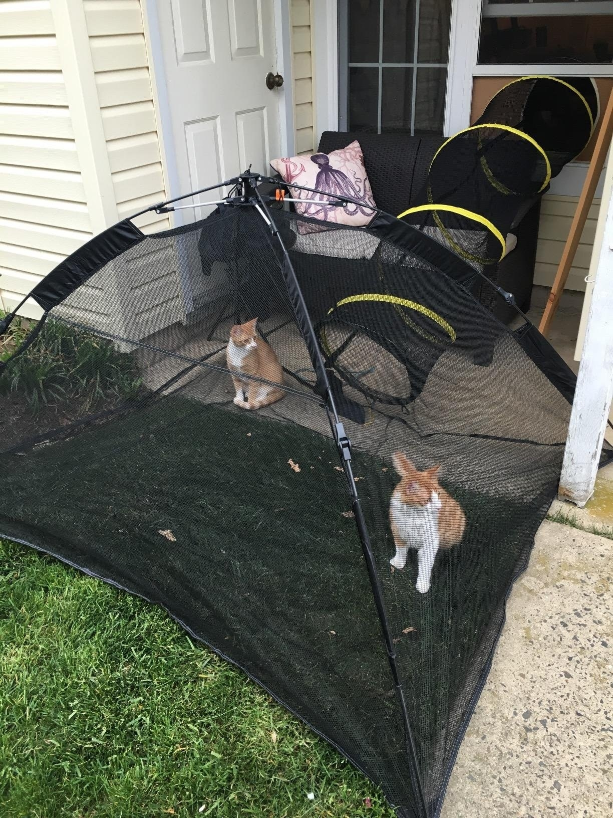 Cats in a black mesh tent
