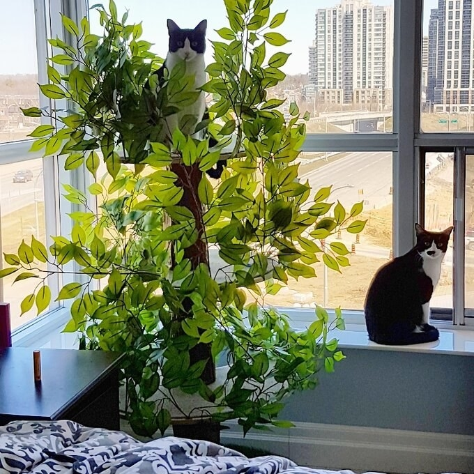 a reviewer's cat tree with a cat perched on top