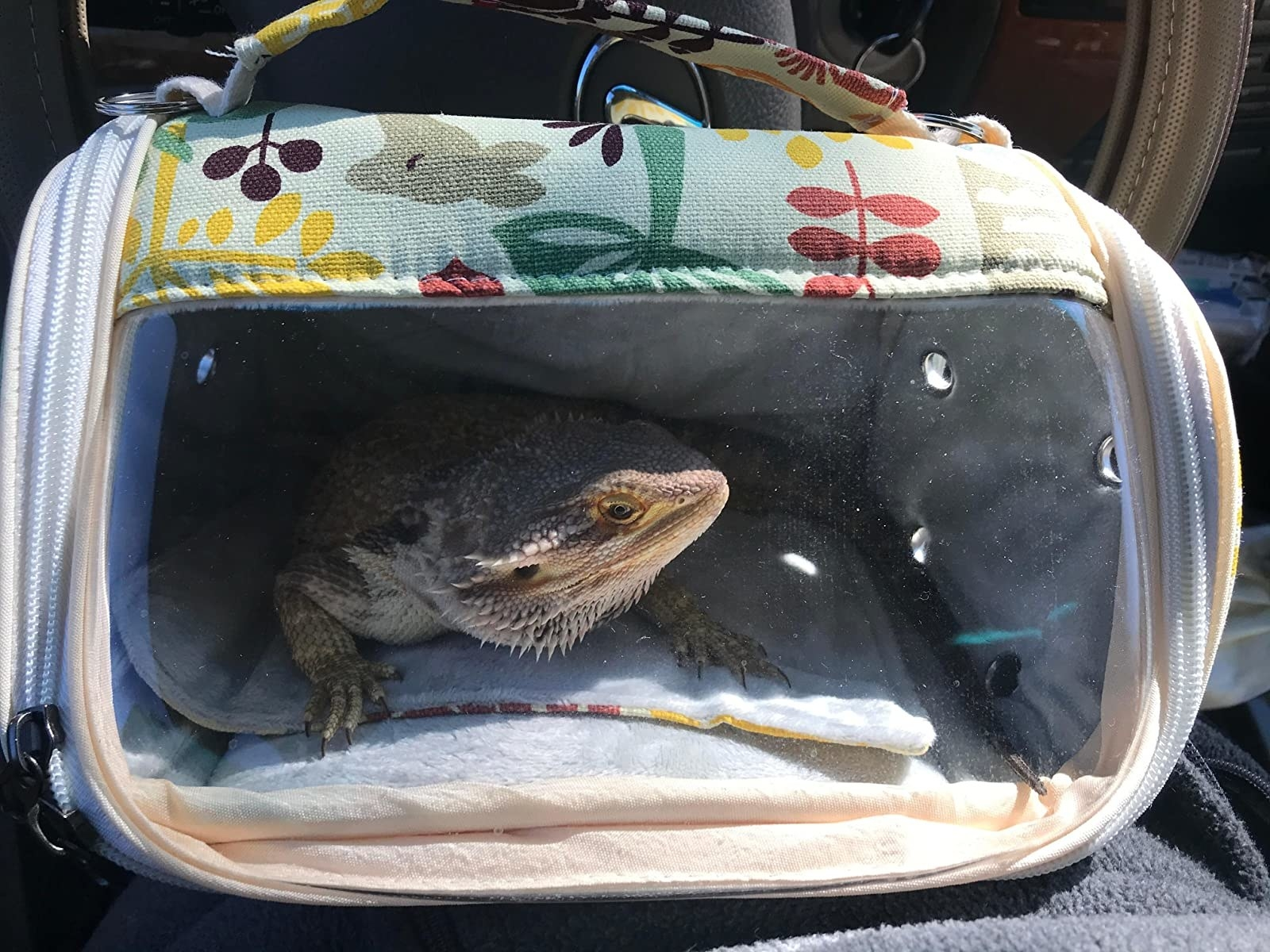 A lizard in the carrier