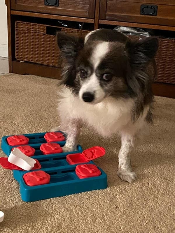 A dog celebrates solving the puzzle