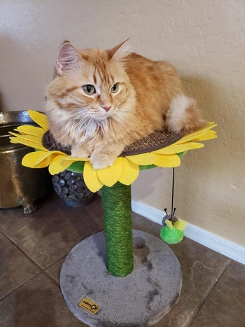 cat sitting on top of short sunflower perch