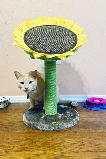 cat next to the perch with a scratching post 'stem'