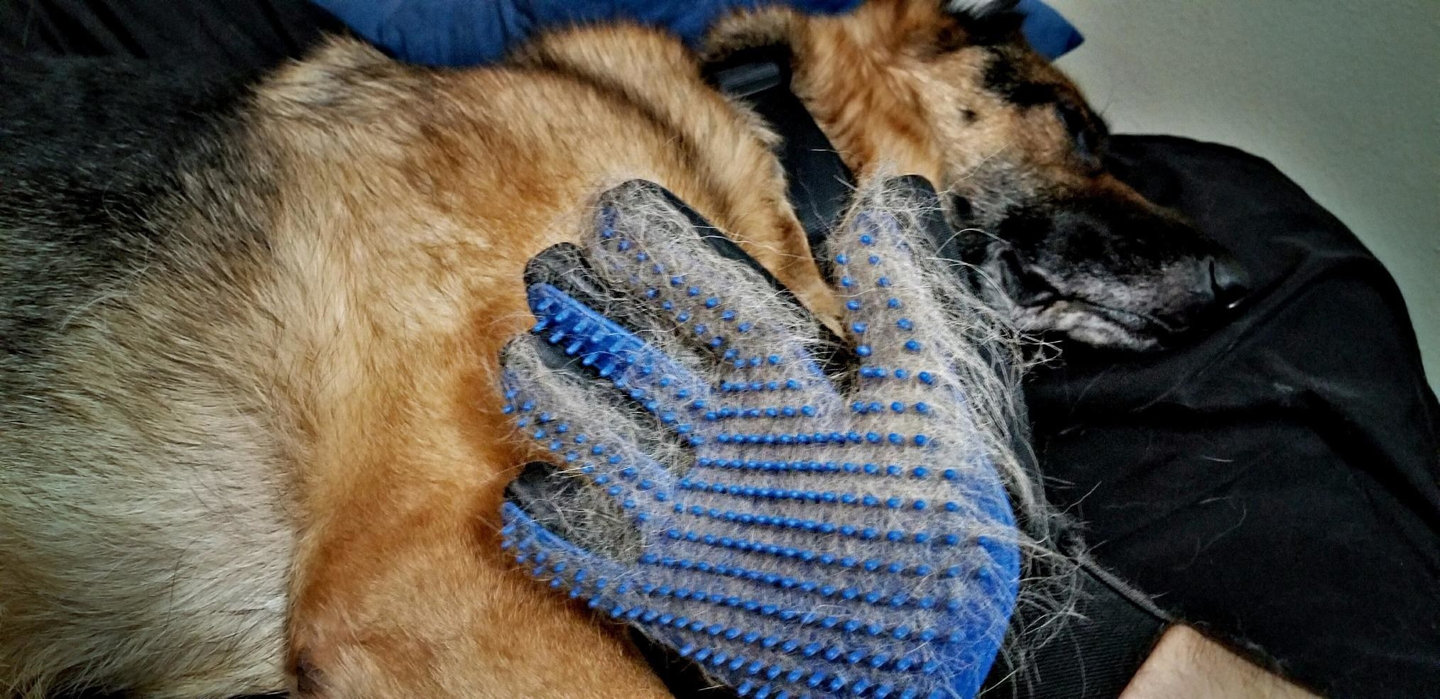 The glove, which has small nubs to pick up the pet's loose fur from their coat