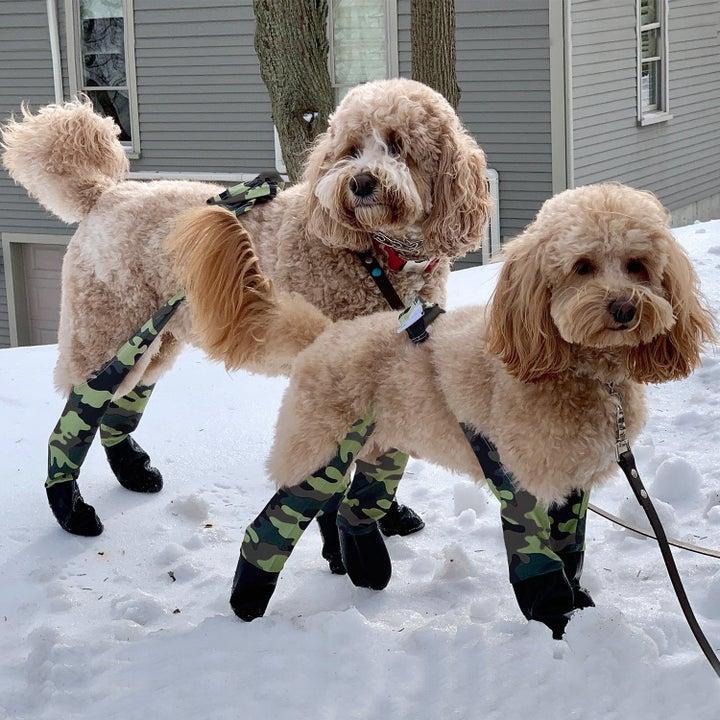 dogs wearing camo print snug fit leggings