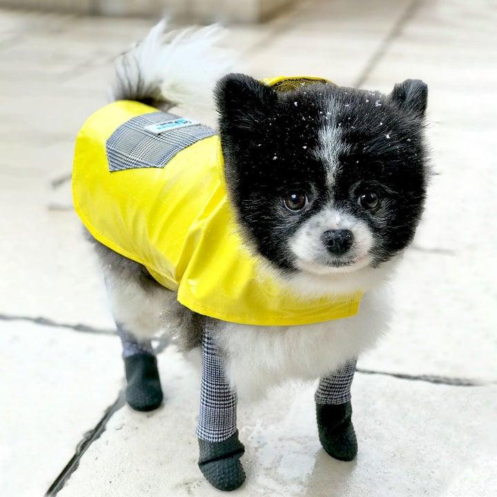 dog wearing yellow rain jacket