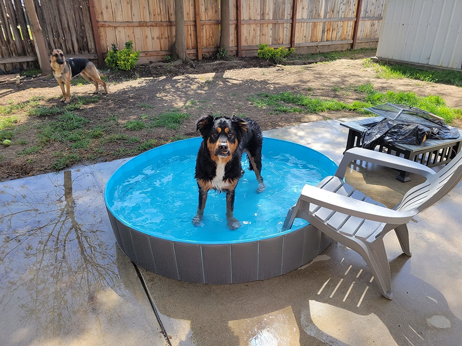 A medium-sized dog in the pool, which allows the water to reach to the top of its legs