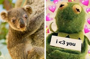 """Left: Photo of a koala joey; Right: A Kermit reaction meme with him holding up a sign saying """"I <3 you"""""""