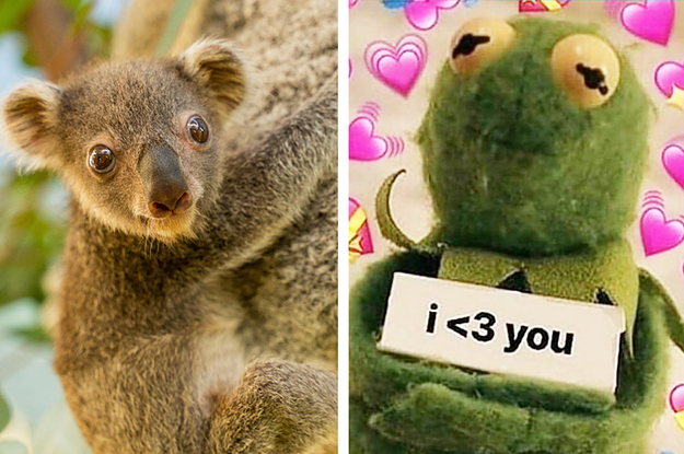 Im Screaming In Absolute Delight At These Photos Of A Six Month Old Koala Joey
