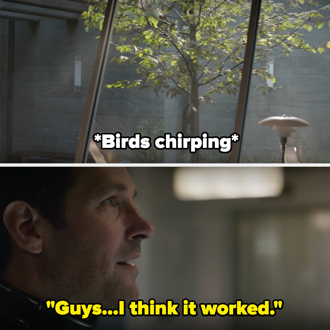 Scott sees birds chirping out the window and Scott says he thinks it worked