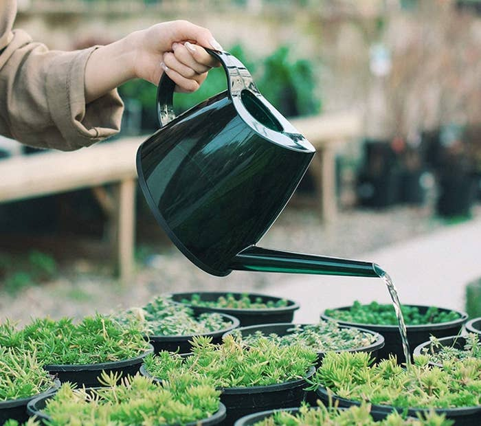 The green watering can