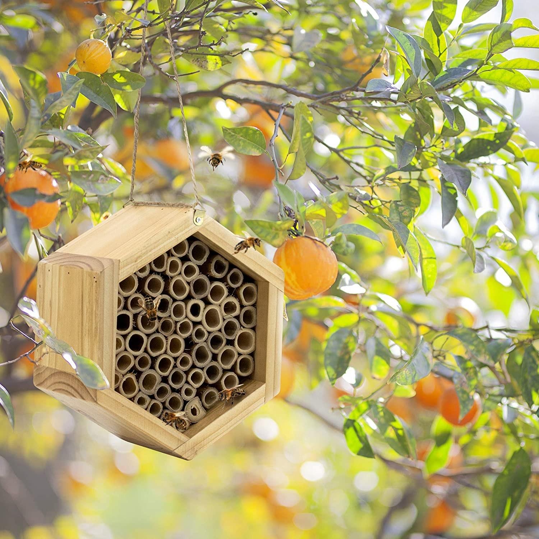 mason bee house hung in tree