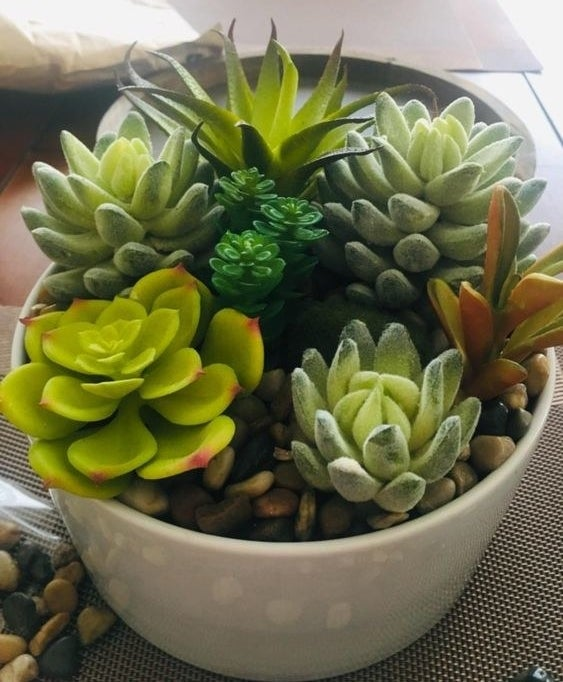 Reviewer's potted succulent with the pebbles