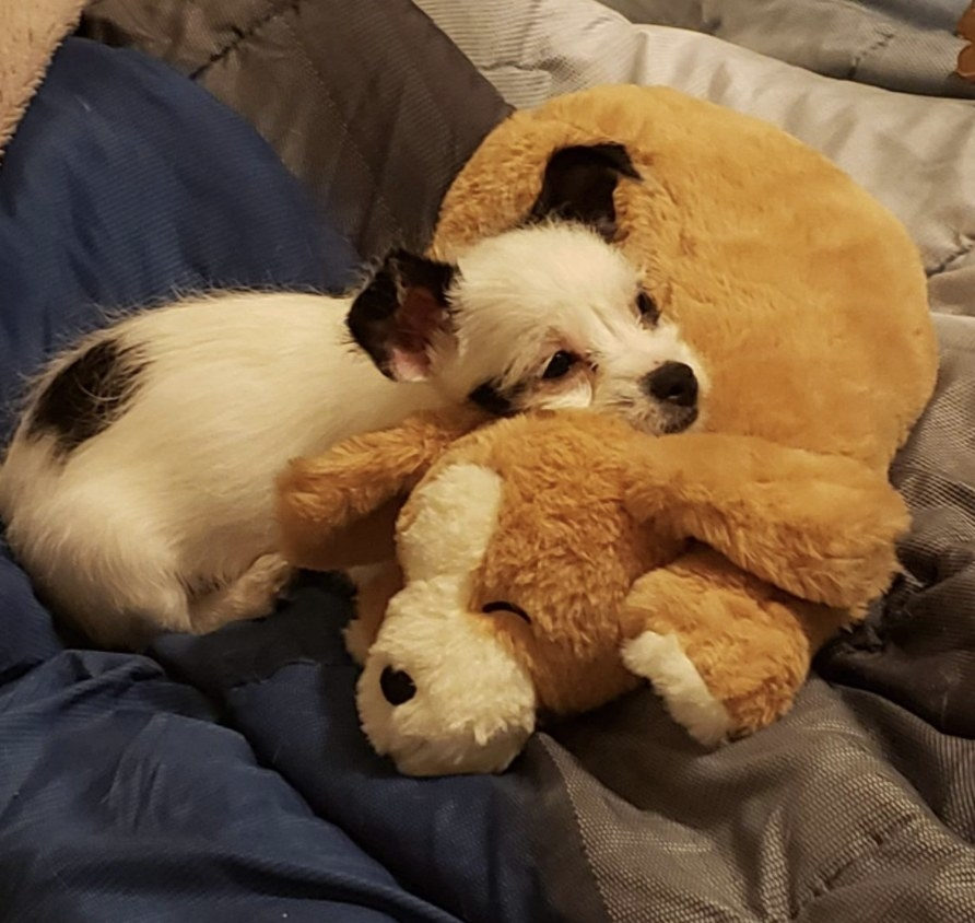 A puppy relaxing on a plush