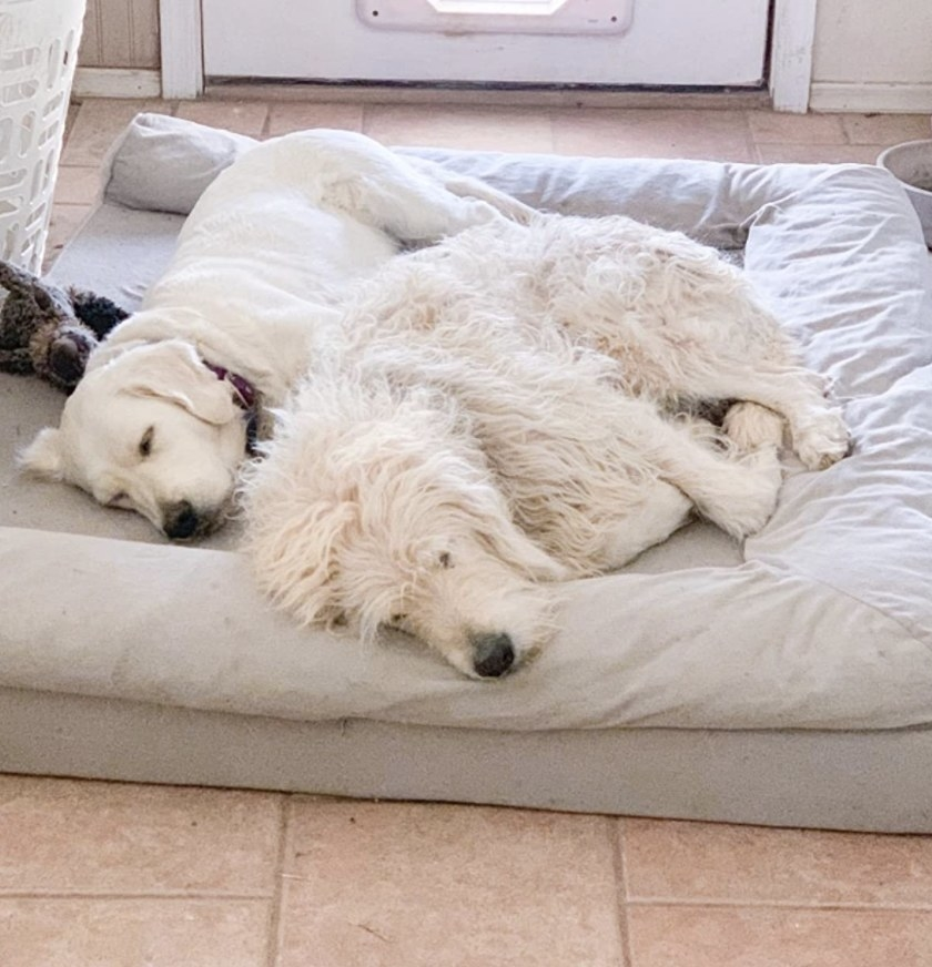 Two dogs sleeping on a dog bed