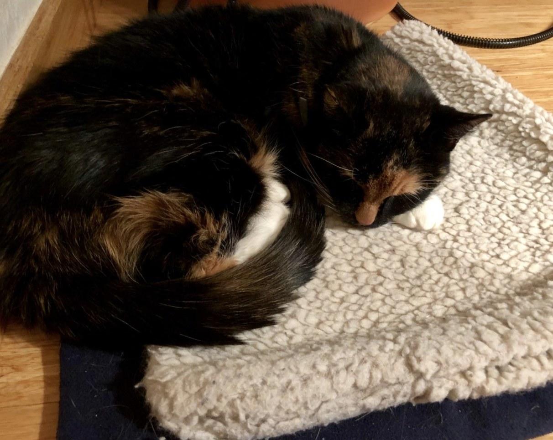 A cat sleeping on a heating pad