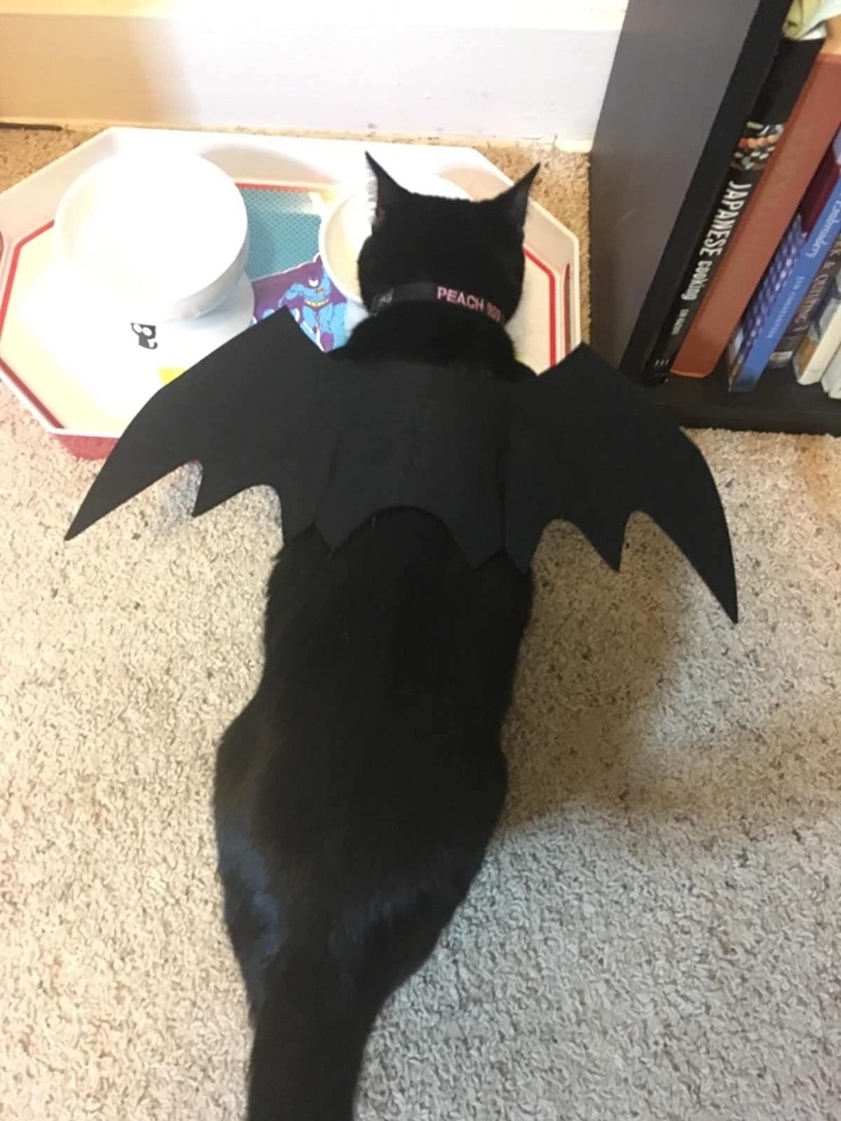 A black cat with the bat wings, which attach around the neck and middle
