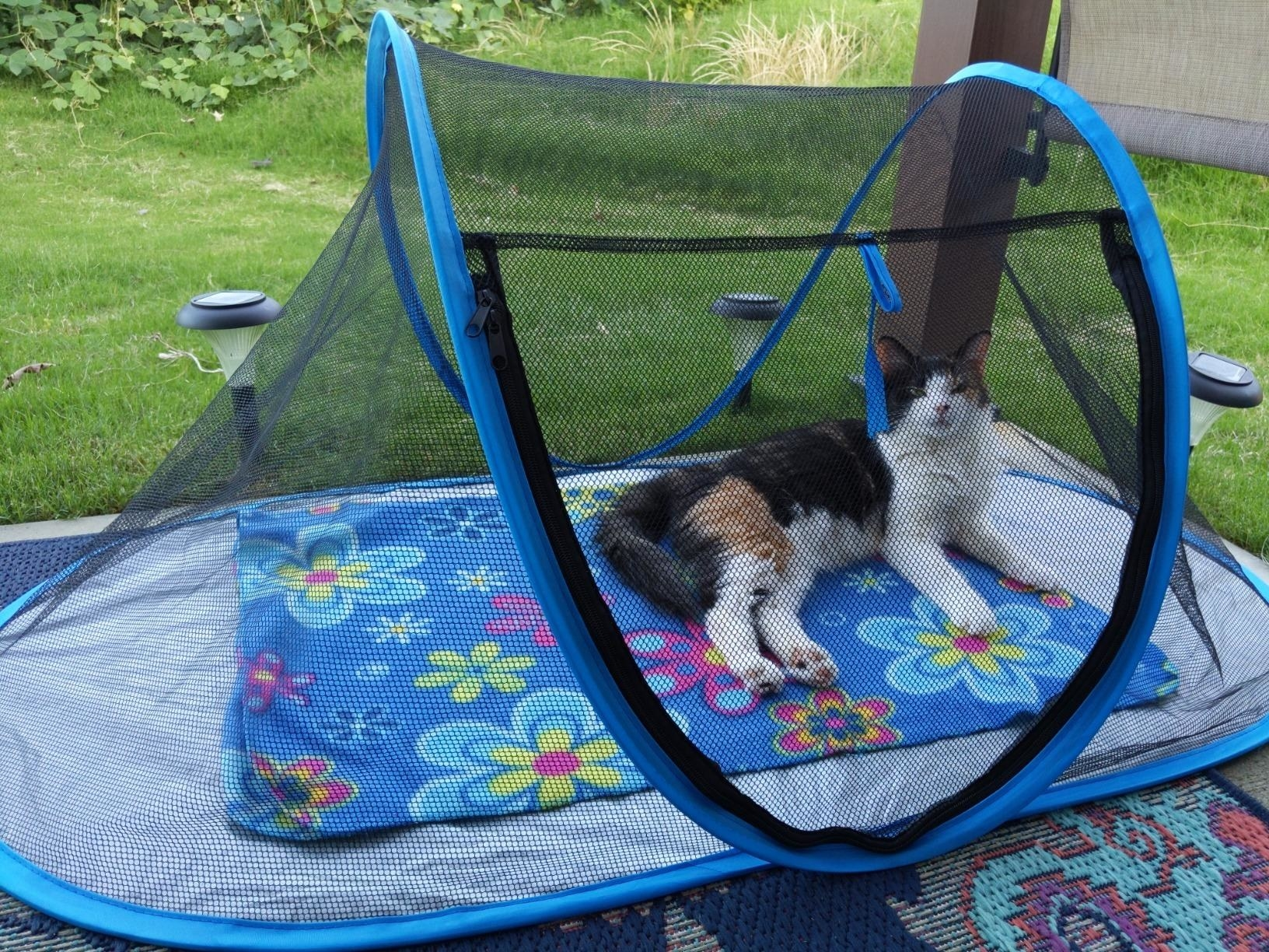 The tent, which has a tarp-like bottom and a tent-style triangular top, which is made entirely of mesh, so the cat can see through all of it