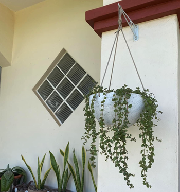 reviewer image of pot hanging outside