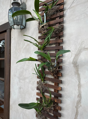 reviewer image of trellis attached to outside wall with orchids planted in the rungs