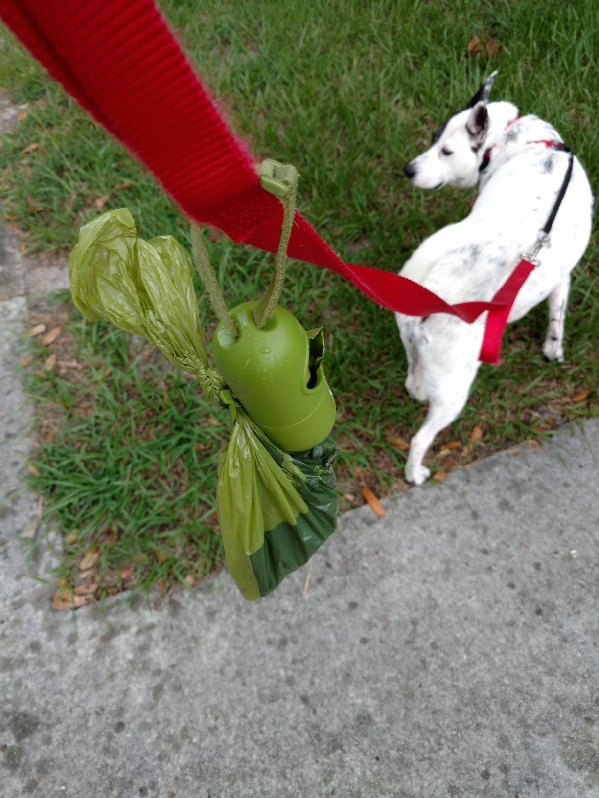 the poop bag attached to a leash with a white dog in the background