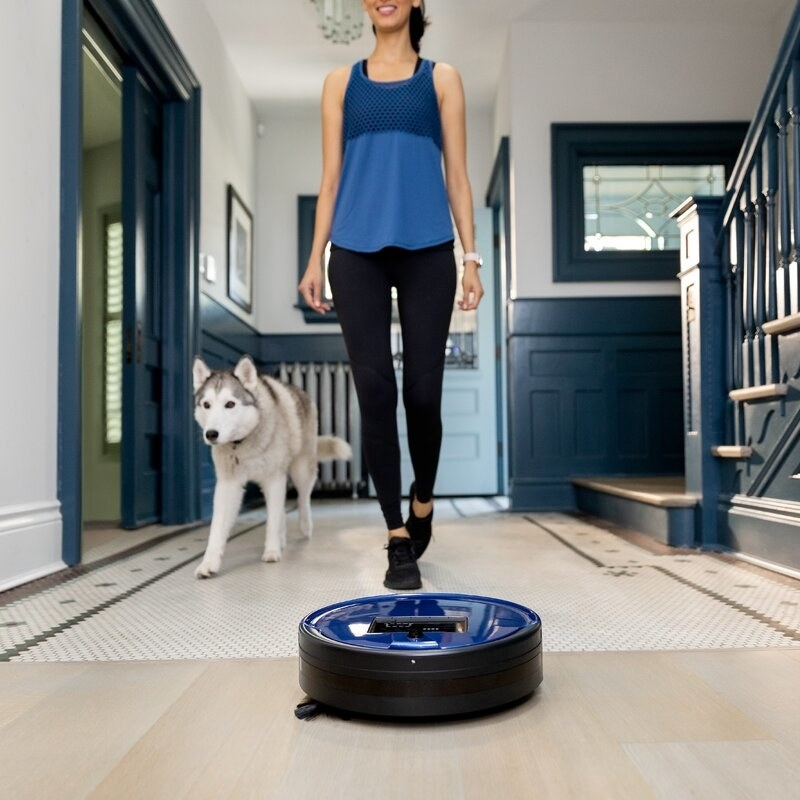 a person and Husky walking on a carpet behind the round blue vacuum