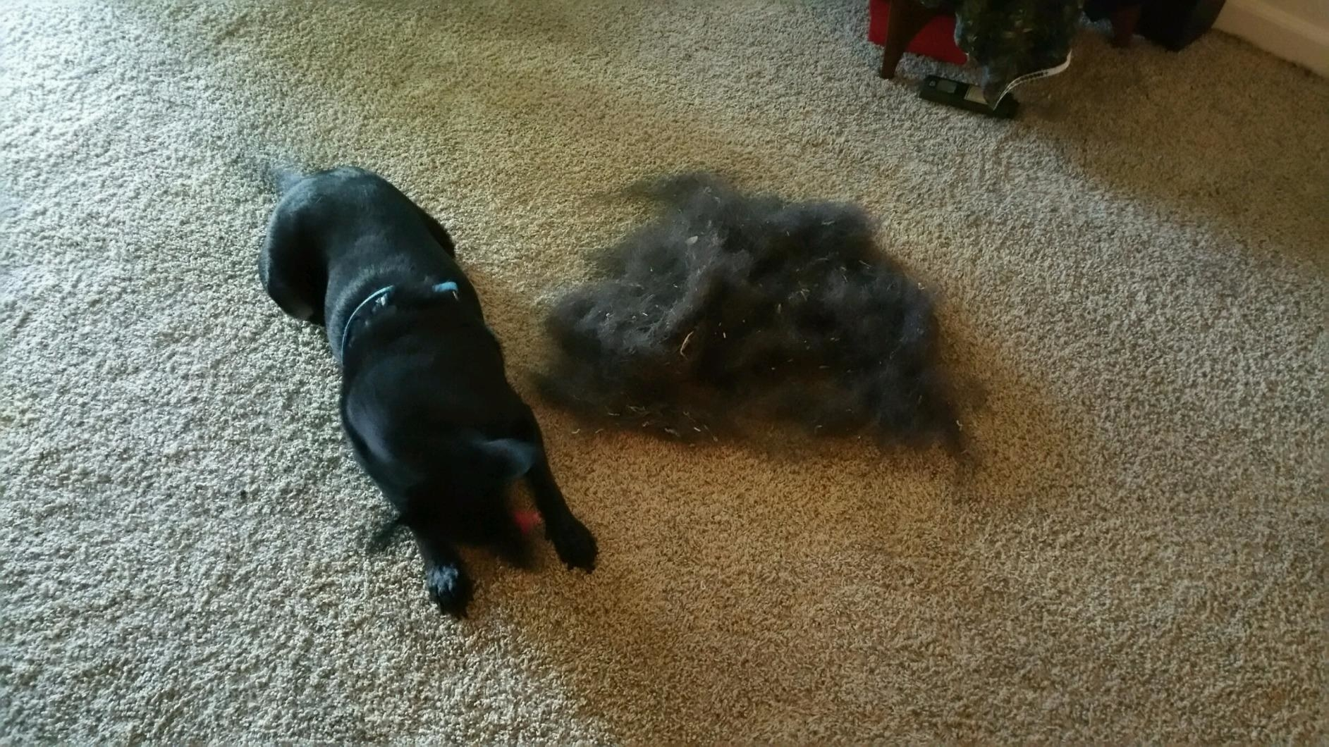 a dog laying next to a large pile of swept fur