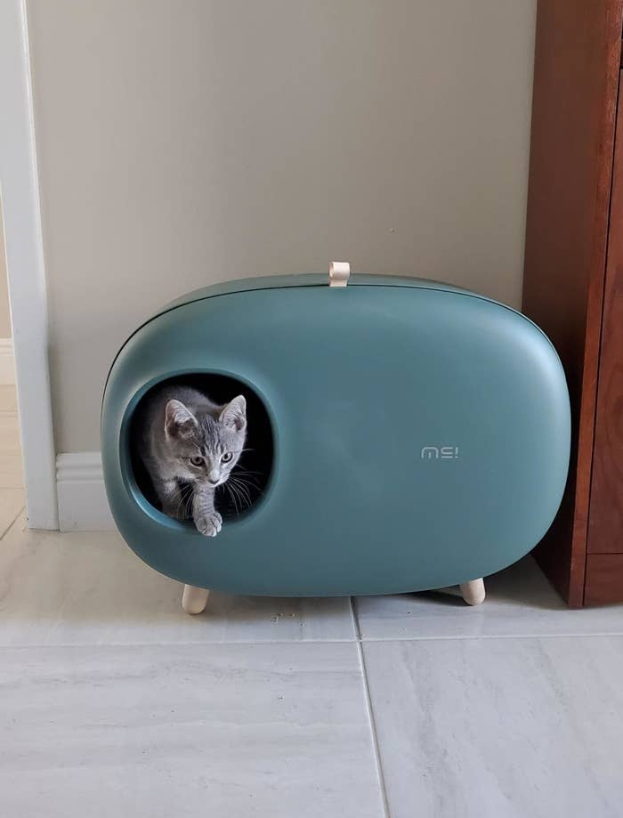 The litter box, which is on small splayed legs and is oval-shaped, with a small circular hole for entry, in blue
