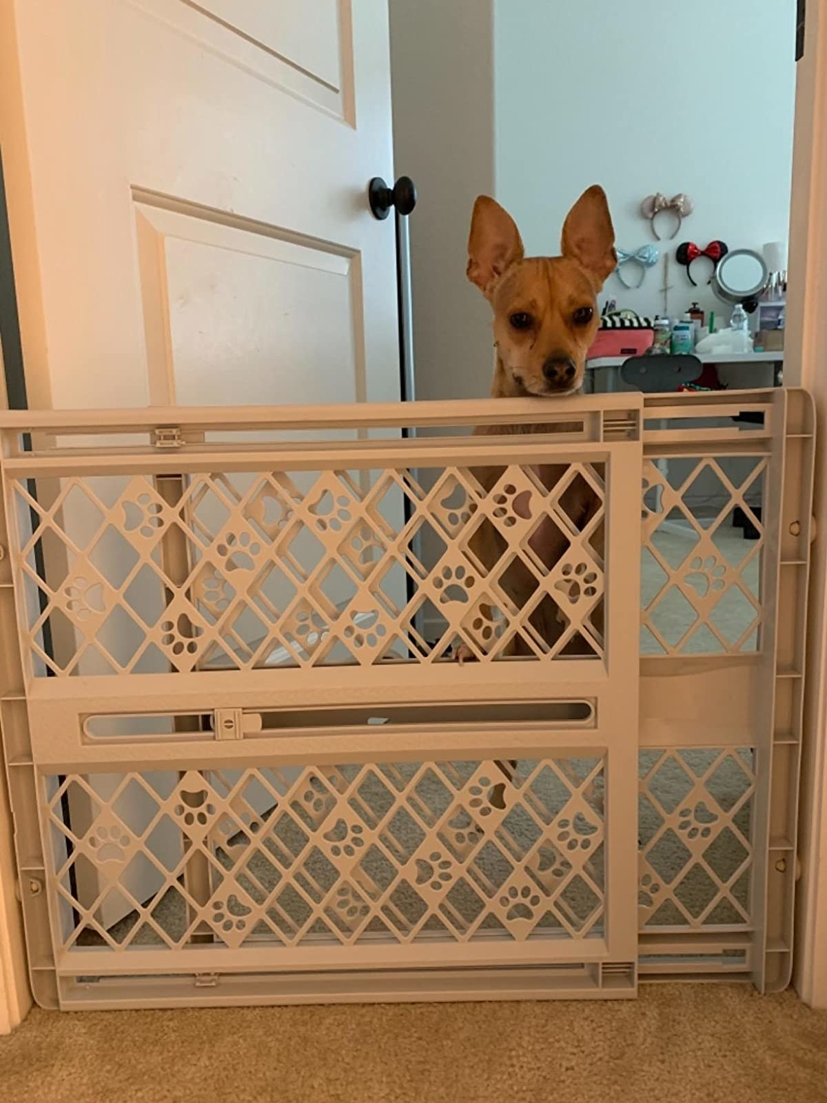 a dog looking over the top of the plastic gate