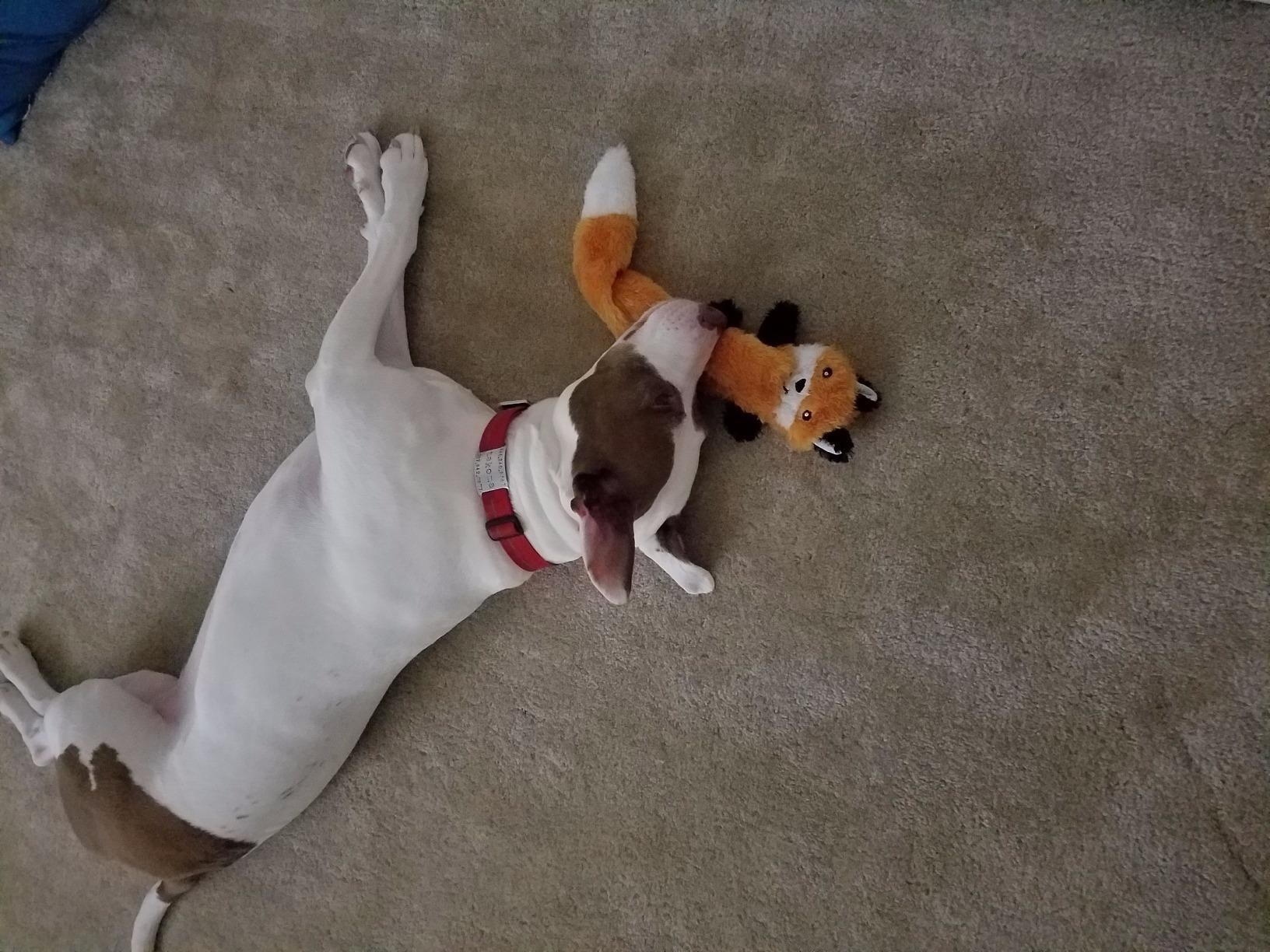 a dog laying with one of the toys
