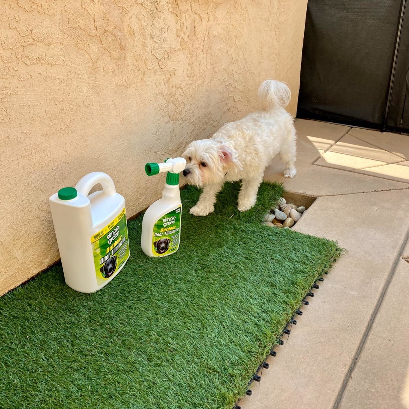 a dog and the odor eliminator on a lawn
